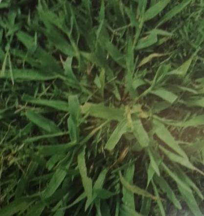 Weed Control Don S Bees Termites Amp Weeds Pest Control